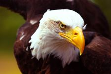 Bald Eagle State Park HD Wallpapers