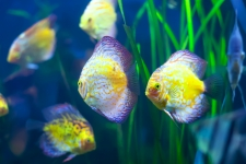 Fish Tank HD Wallpaper